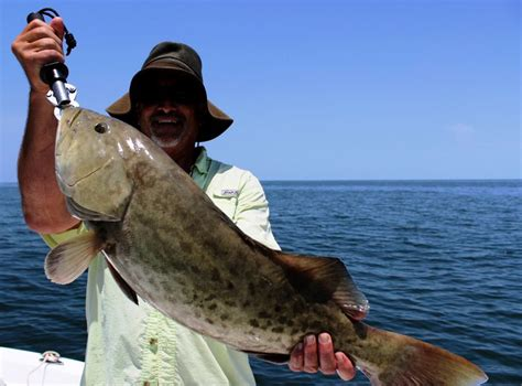 gag grouper season fishing opens font disqus increase email comments print