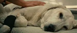 Dog Death Double Bill – Marley & Me (2008)/Hachi: A Dog's ...