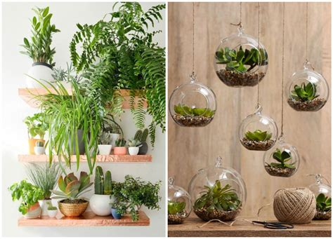 Decorate Your Home With Indoor Plants, Easy Home Decor