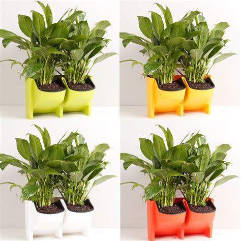 Garden Decoration Pots by 2 Pocket Vertical Wall Planter Self Watering Hanging