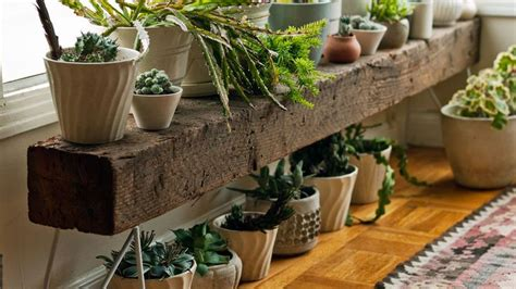 Best 25+ Indoor Plant Stands Ideas On Pinterest