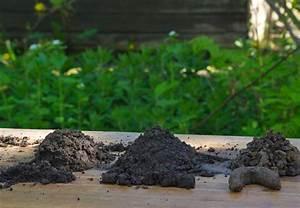Besteht Sand Aus Muscheln : bodenarten und erde tipps von obi f r guten gartenboden ~ Kayakingforconservation.com Haus und Dekorationen