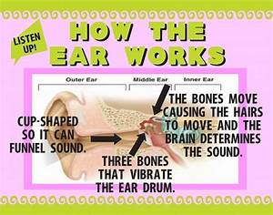 Make A Science Fair Project About How The Human Ear Works