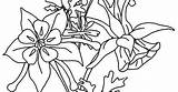 Columbine Flower Coloring Pages sketch template