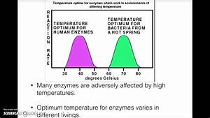 How Ph And Temperature Affect Enzyme Activity