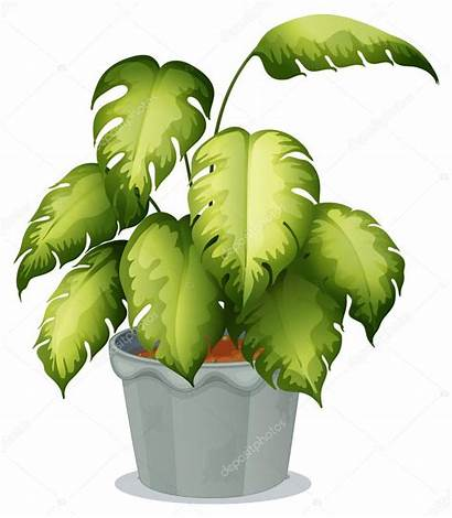 Plant Clipart Pot Ornamental Vector Garden Background