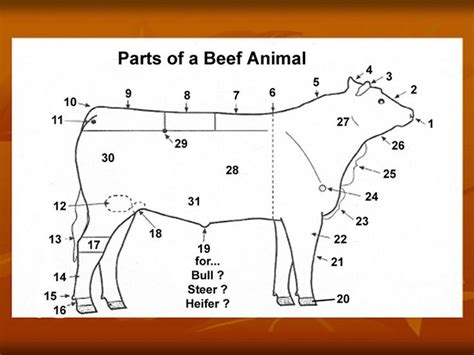 showmanship questions for beef ffa is pinterest