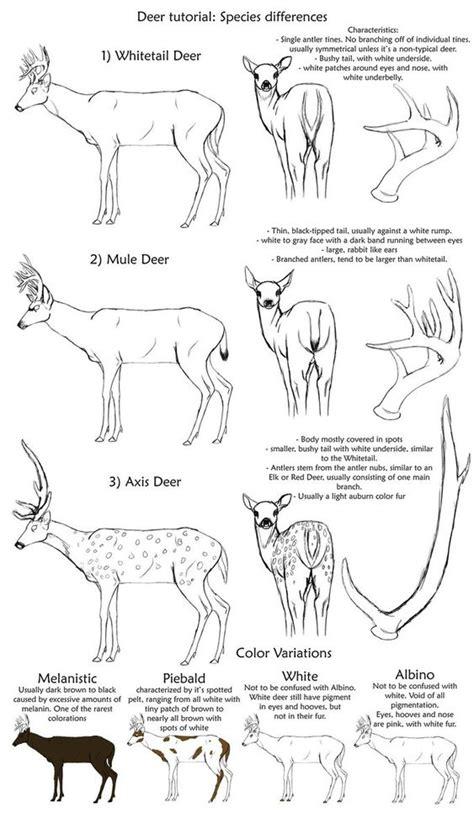 deer concept  character design references