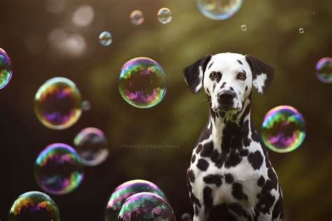 Best 25 Painkillers For Dogs Ideas On Pinterest