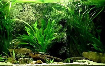 Aquarium Fish Tank Wallpapers Backgrounds Desktop Wiki