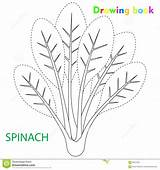 Spinach Drawing Coloring Illustration Vegetable sketch template