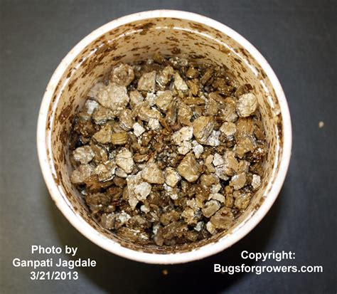 Bugs for Growers: How to assess the viability of ...