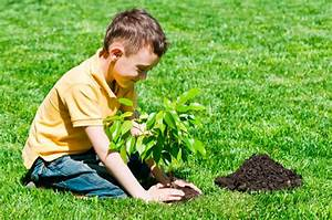 On Arbor Day Plant the Right Tree - Mamiverse