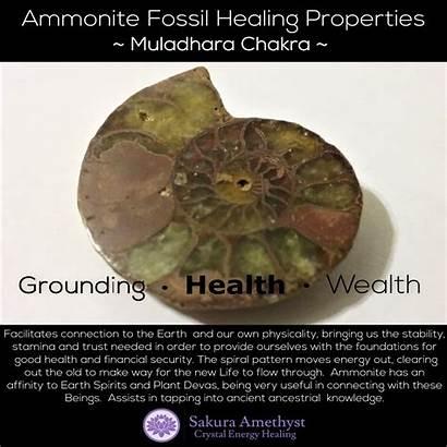 Ammonite Properties Healing Depuis Enregistree Sa