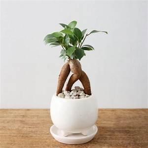 Grande Plante D Intérieur Facile D Entretien : plantes vertes int rieur faciles entretenir ~ Premium-room.com Idées de Décoration