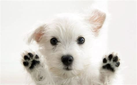 Pet Animals Wallpapers - hd wallpaper background image 1920x1200 id
