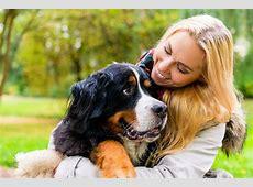 Berner Sennenhund Berner machen glücklich!
