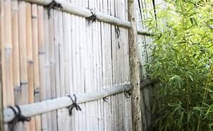 Bambus Vernichten Tipps : bambus als sichtschutz pflege tipps feng shui mehr ~ Whattoseeinmadrid.com Haus und Dekorationen
