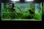 鱼缸造景|摄影|生态|随心吾欲 - 原创作品 - 站酷 (ZCOOL)