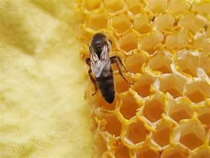 Warum Machen Bienen Honig : startseite silzer honig 39 s webseite ~ Whattoseeinmadrid.com Haus und Dekorationen