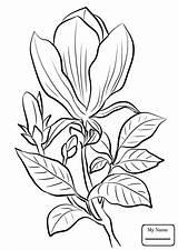 Magnolia Coloring Tattoo Watercolor Printable Awesome Flower Getcolorings Flo Getdrawings sketch template