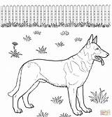 Coloring Shepherd German Pages Puppy Printable Dogs Animals sketch template