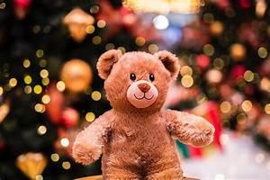 Teddy Bear Hund : teddy bear hunt the education hub ~ A.2002-acura-tl-radio.info Haus und Dekorationen