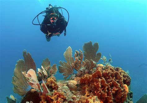 Padi Dive by Padi Scuba Diver
