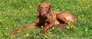 Vermieter Verbietet Hund : bauernhof urlaub mit hund bayerischer wald ferien mit hund ~ Lizthompson.info Haus und Dekorationen