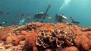 Wonderful Indonesia : Diving - YouTube  Wonderful