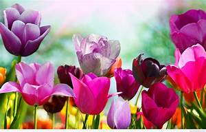 Spring flowers background 2015 2016