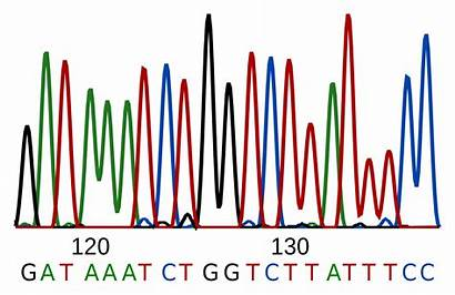Genome Human Sequence Dna Example Read Project