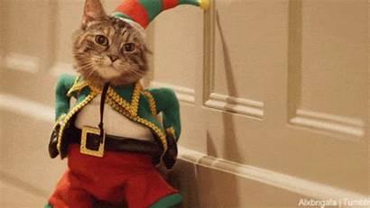 Cats Costumes Deer Gifs Cat Dogs Spirit