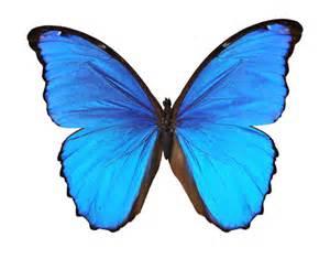 wandsticker küche wandtattoo no 444 blauer morphofalter schmetterling