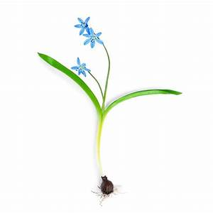 Parts Of A Flowering Plant  Lesson For Grades 2