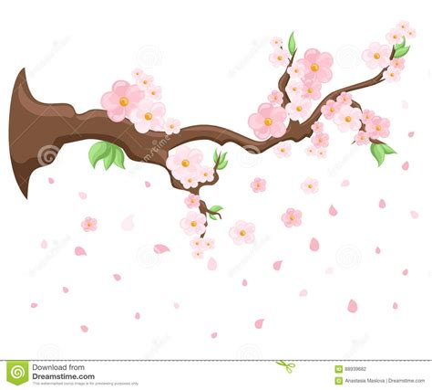 Branch Of Pink Blossoming Sakura Japanese Cherry Tree