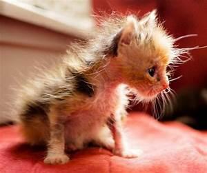 15 really cute kittens 12   Kitty Bloger