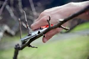 Wann Apfelbaum Pflanzen : baumschnitt beim apfelbaum wann wie wird geschnitten ~ Lizthompson.info Haus und Dekorationen