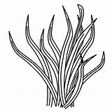 Coloring Pages Plants Sea Plant Clipart Grass Drawing Printable Template Ocean Drawings Coral Underwater Sheets Clip Cliparts Library Line Draw sketch template