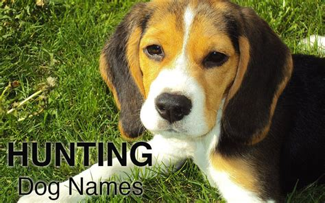 dog names great ideas  naming  puppy  happy