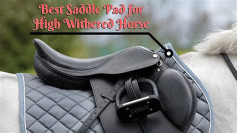 saddle pad horse withered sports outdoors