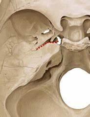 Temporal Bone: Fissures and Foramina Flashcards   Quizlet