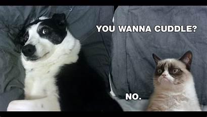 Meme Cat Grumpy Desktop Cuddle Wallpapers Computer