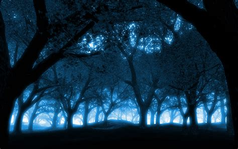 Blue Tree Wallpaper by Blue Black Trees Forest Sunlight Wallpapers