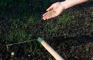 Rasen Vertikutieren Wie Oft : plantura das hobbyg rtner gartenmagazin ~ Markanthonyermac.com Haus und Dekorationen