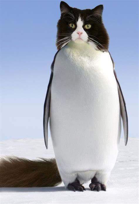 hilarious pet penguins photoshop pics barnorama