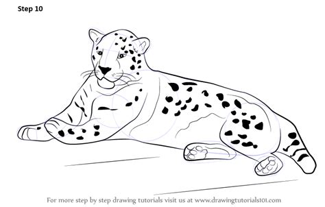 learn   draw  jaguar zoo animals step  step