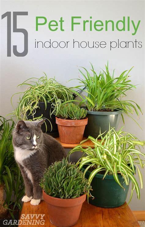 low light indoor plants safe for cats 15 indoor plants that are safe for cats and dogs indoor