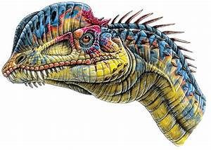 (: We Must Fight For Our Lives A Dinosaur RP. (Restart ...  Dilophosaurus