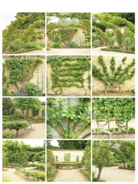 Janine M Adelaide 78 Images About Espalier On Pinterest Pear Trees